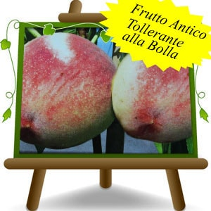 Pesche-Cesarini-(it)-min